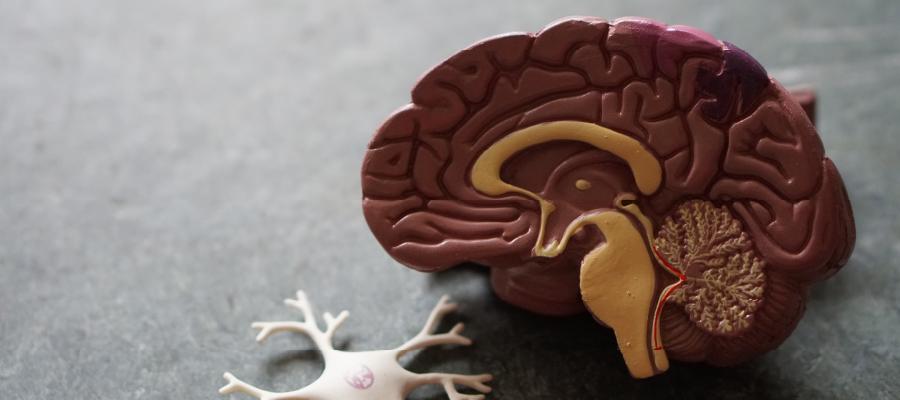 mentalità e cervello